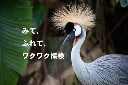 沖縄(本島)|名護・本部・瀬底島